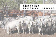 Kaiuroo breeding program update